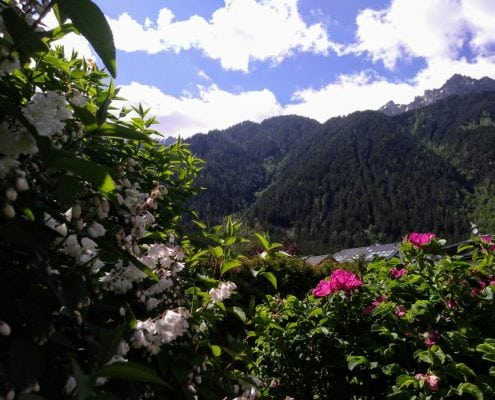 Beautiful Garden With A Stunning Chamonix Vista